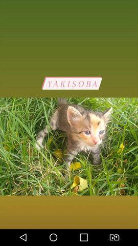 Doação de gatinhas - Foto 3