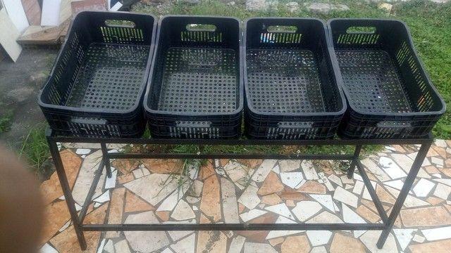 Bancadas de caixas de frutas e verduras 1200 reais