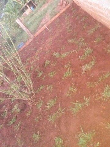 Planto grama batatais por 5 reais o metrô já e plantada - Foto 2