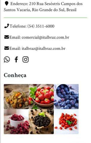 Frutas Vermelhas - Foto 2