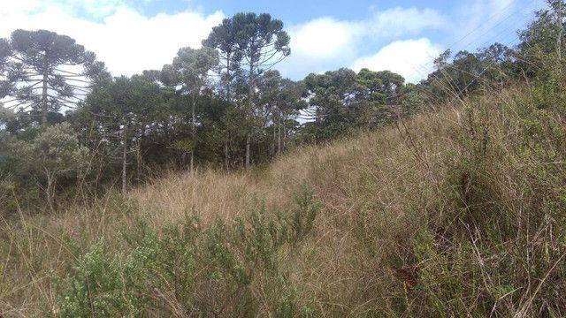 Maravilhoso Sítio Com 16 Hectares, Vila Maria, Em Piranguçu/Mg, A 6 Km De Campos Do Jordão - Foto 10
