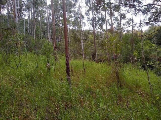 Área de terras com eucalipto, bom acesso, Fraga Caraá - Foto 10