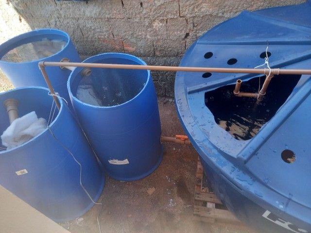 Sistema de criação de peixes em caixa d'água
