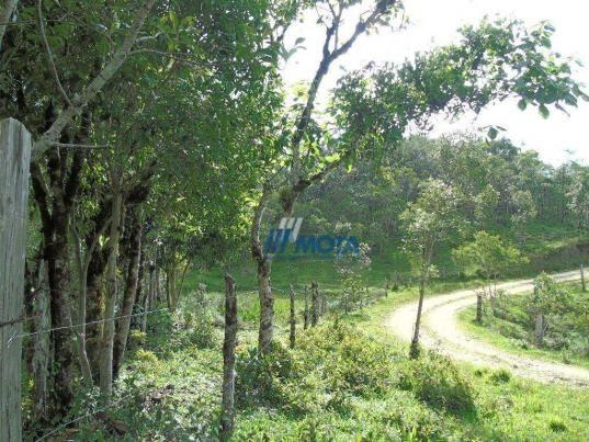 Sítio à venda, 354712 m² por r$ 250.000,00 - miringuava - são josé dos pinhais/pr - Foto 18