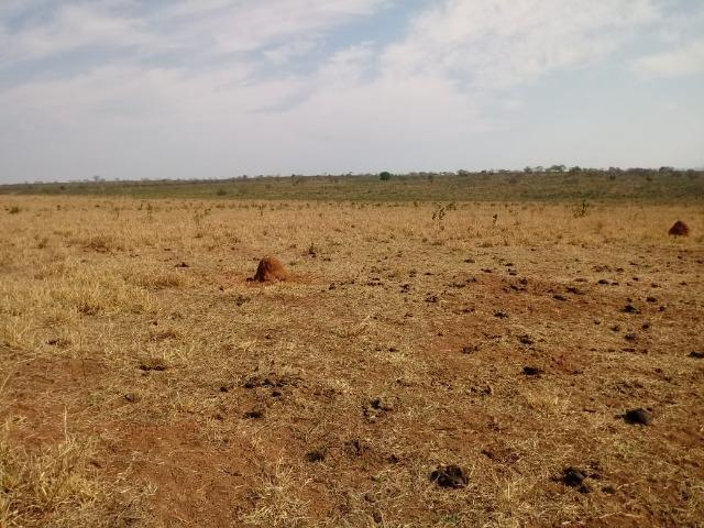 Fazenda Com 1.100 hectares Lago do Manso - Foto 16