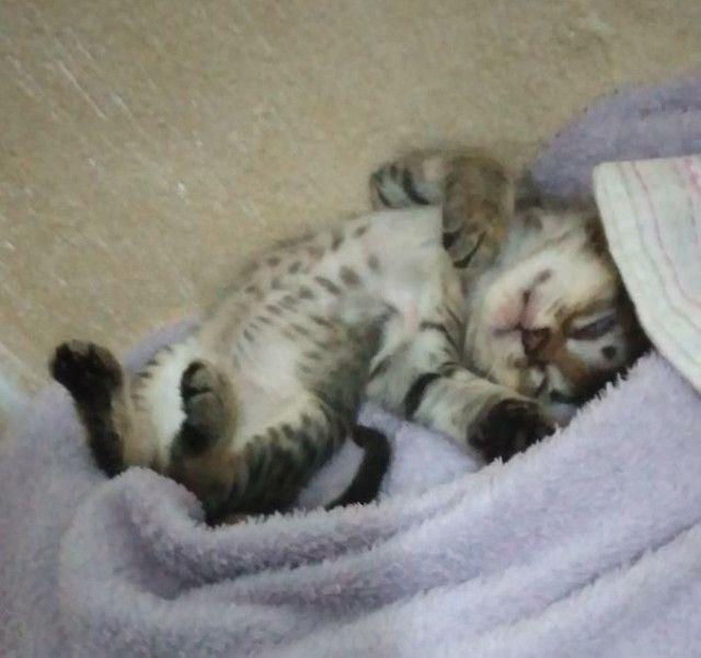 Doação 3 gatinhas - Foto 3