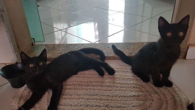 Doação de dois lindos gatinhos