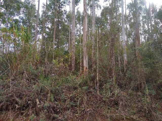 Área de terras com eucalipto, bom acesso, Fraga Caraá - Foto 11