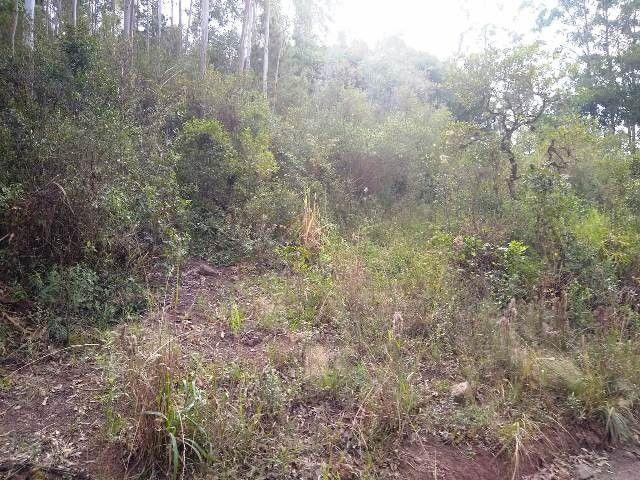 Área de terras com eucalipto, bom acesso, Fraga Caraá - Foto 5