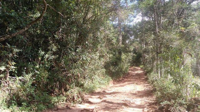 Maravilhoso Sítio Com 16 Hectares, Vila Maria, Em Piranguçu/Mg, A 6 Km De Campos Do Jordão - Foto 5