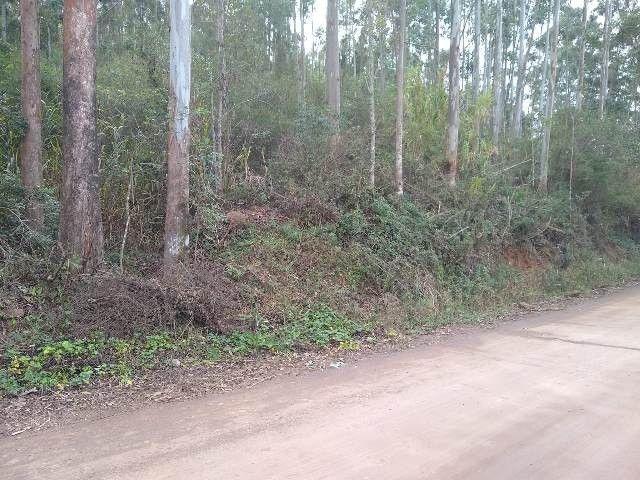 Área de terras com eucalipto, bom acesso, Fraga Caraá - Foto 6