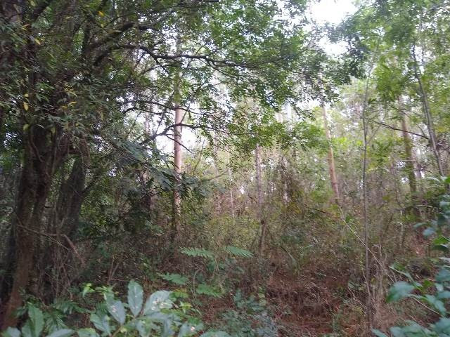 Área de terras com eucalipto, bom acesso, Fraga Caraá - Foto 4