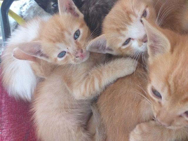 Gatinhos lindos para adoção - Foto 3