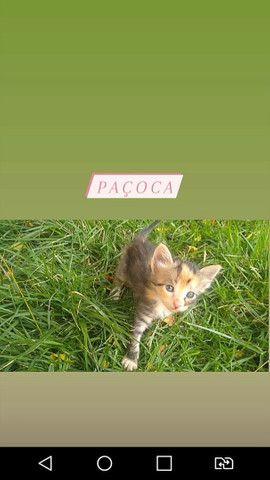 Doação de gatinhas - Foto 2