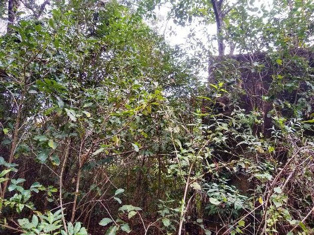Área de terras com eucalipto, bom acesso, Fraga Caraá - Foto 7