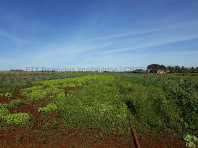 Grande oportunidade para investidores - São Gabriel do Oeste/MS - Foto 9