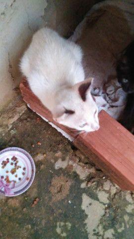 Doa Se esses gatinhos muito dócil,  e lindos.  - Foto 2