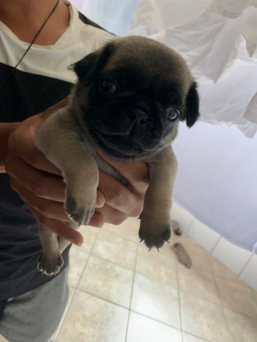 Cachorrinho - Foto 3