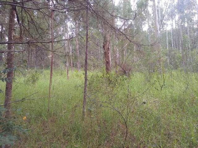 Área de terras com eucalipto, bom acesso, Fraga Caraá - Foto 8