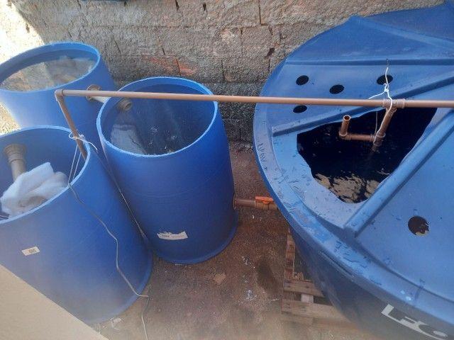 Sistema de criação de peixes em caixa d'água  - Foto 2