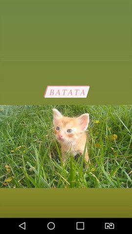 Doação de gatinhas - Foto 5
