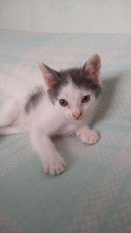 Gatinhos disponíveis para adoção - Foto 2