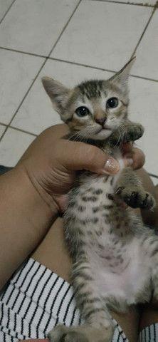 Doação 3 gatinhas - Foto 4