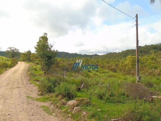 Sítio à venda, 354712 m² por r$ 250.000,00 - miringuava - são josé dos pinhais/pr - Foto 5