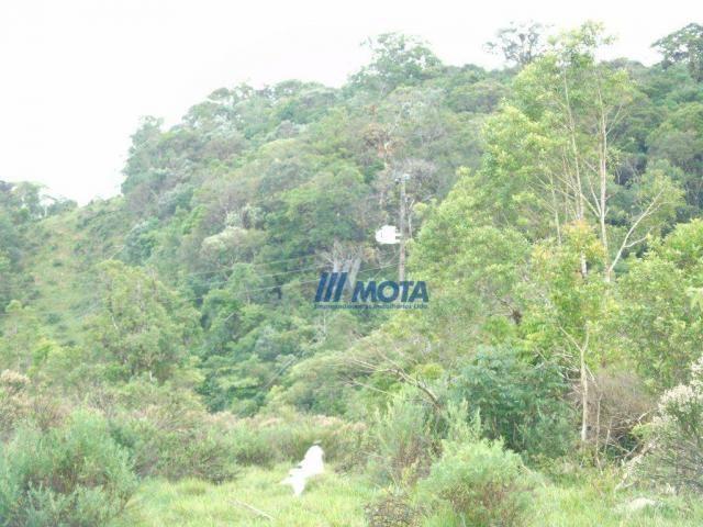 Sítio à venda, 354712 m² por r$ 250.000,00 - miringuava - são josé dos pinhais/pr - Foto 17