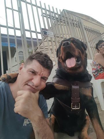 Cachorro procura namorada - Foto 2