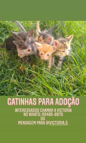 Doação de gatinhas