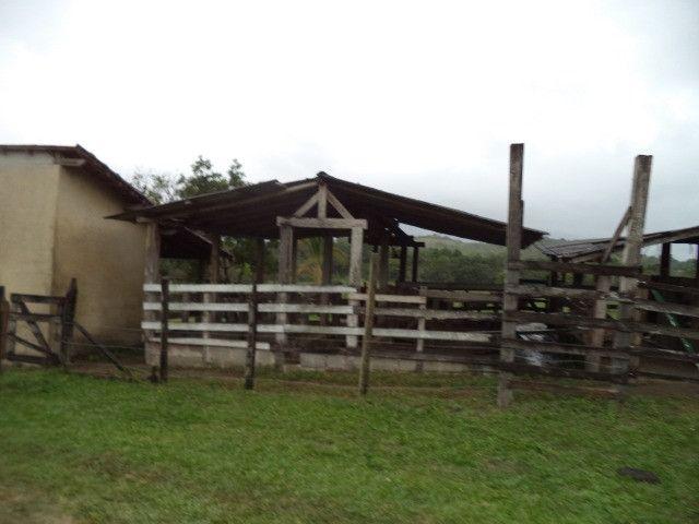 Otimo sítio para criação de gado e moradia - Foto 6