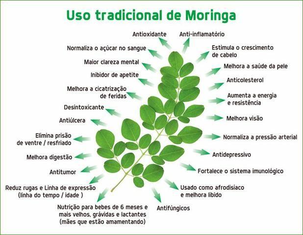 Moringa oleifera. farinha da moringa oleifera. 400g. frete grátis - Foto 4