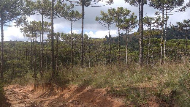 Maravilhoso Sítio Com 16 Hectares, Vila Maria, Em Piranguçu/Mg, A 6 Km De Campos Do Jordão - Foto 9