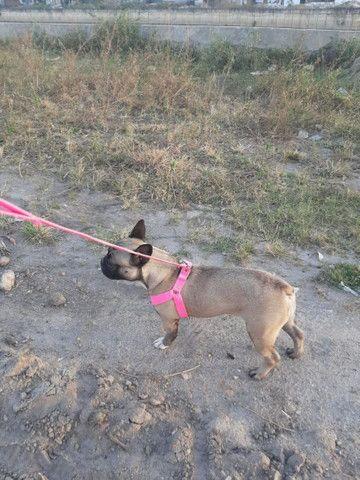 Cachorro - Foto 3