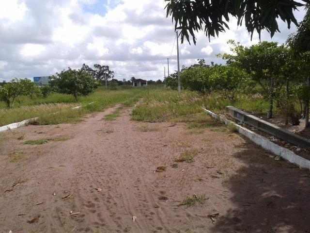 Terreno para mini - granja ( Ceara mirim) 25 x 40 - Foto 3