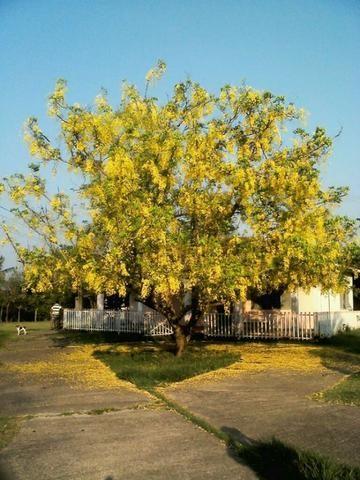 Estancia Casa Rosada 8 hectares - Foto 9