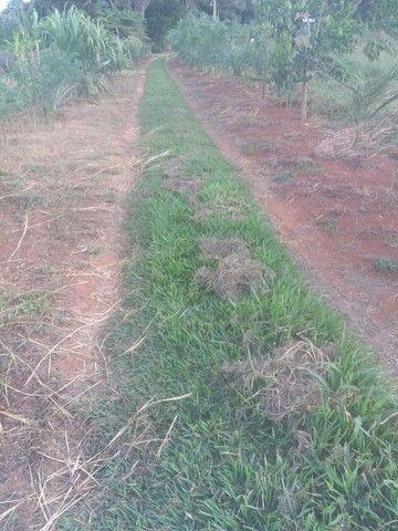 Planto grama batatais por 5 reais o metrô já e plantada - Foto 3