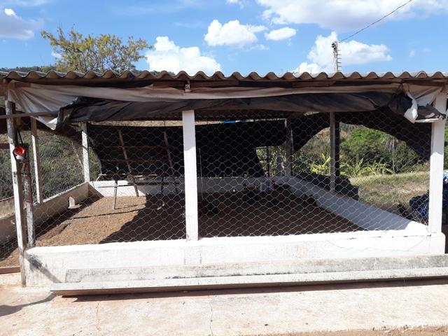 Oportunidade!! Vendo excelente fazenda em Formosa Goiás, com 168 hectares com muita água - Foto 9