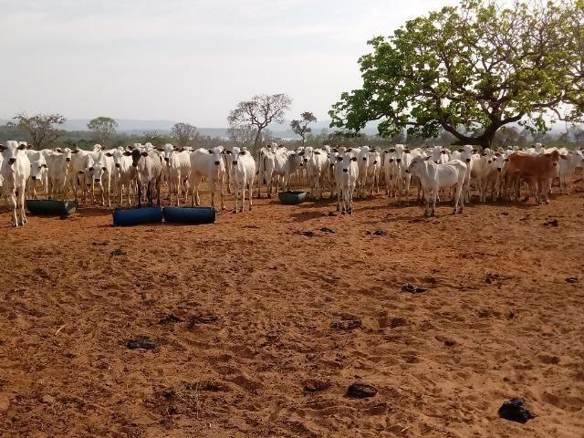 Fazenda Com 1.100 hectares Lago do Manso - Foto 8