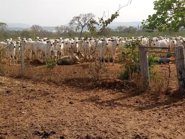 Fazenda Com 1.100 hectares Lago do Manso