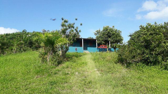 Fazenda 444 Hectares, Pastagem, Produção de Palmito Pupunha (Willian Ricardo) - Foto 5