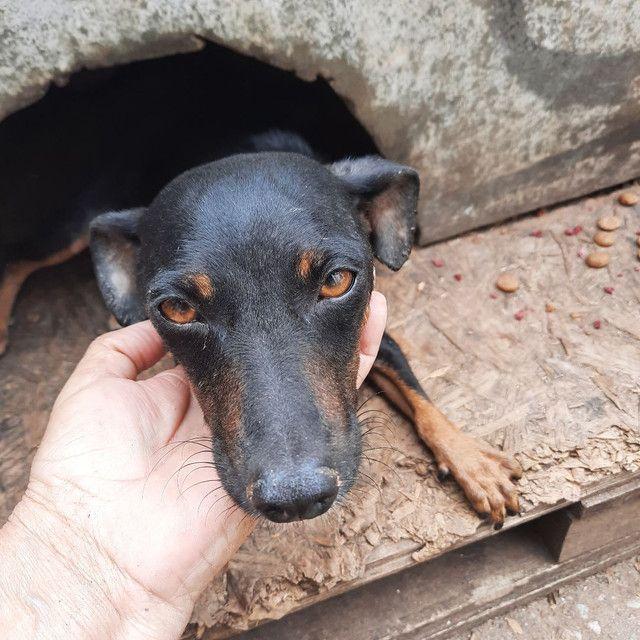 Cachorrinho  - Foto 5