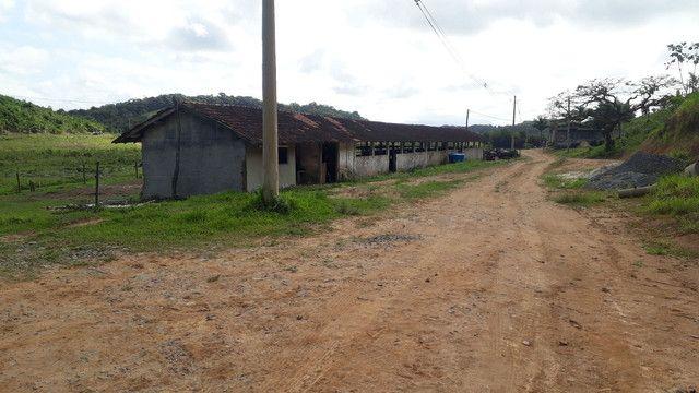 Fazenda 444 Hectares, Pastagem, Produção de Palmito Pupunha (Willian Ricardo) - Foto 8