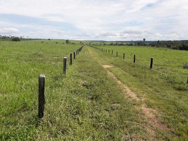 Fazenda de 261 alqueires, com 250 aberto 30 km de Nova Santa Helena -MT - Foto 11
