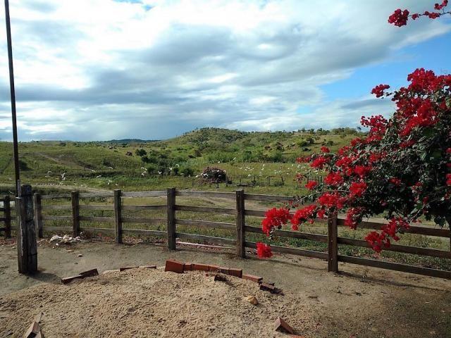 Fazenda Potiraguá/BA 678 hectares - Foto 4