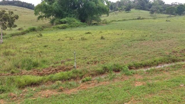 Fazenda 240 has em Tancredo Neves/BA - Foto 3