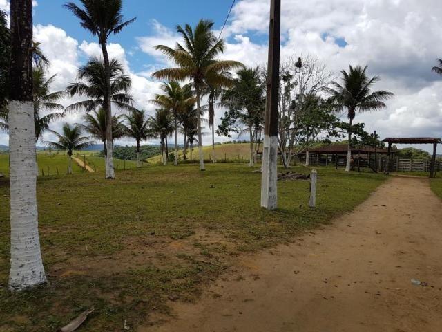 Fazenda 534 has em Tancredo Neves