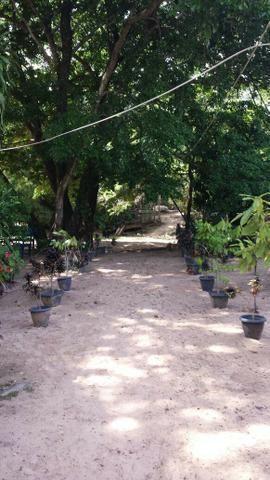 Vende-se linda ilha R$ 200.000,00, em São João do Araguaia, 53km de Marabá - Foto 17