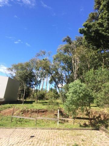 Vendo terreno no Bairro São Luiz - Foto 2